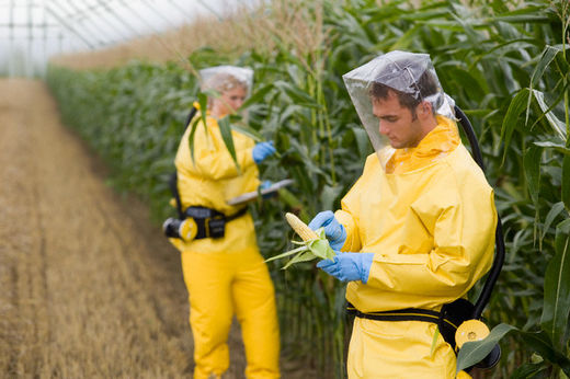 USDA has been withholding disclosures of GMO crop records for over ten years