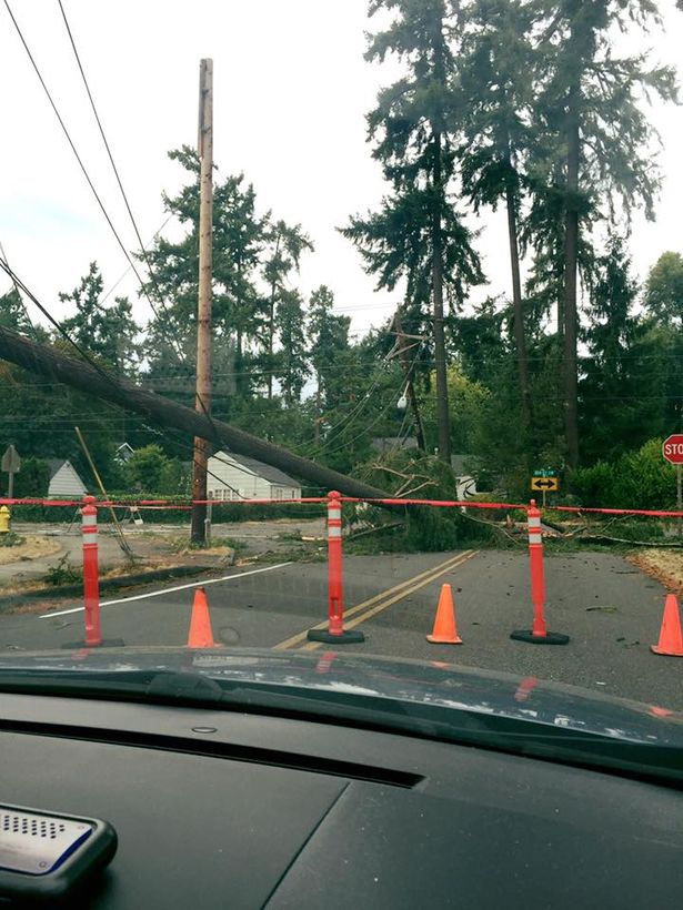 Powerful windstorm topples trees, causes massive power outages in Washington state