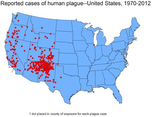 Plague time: CDC puts doctors on alert for Bubonic plague in U.S.