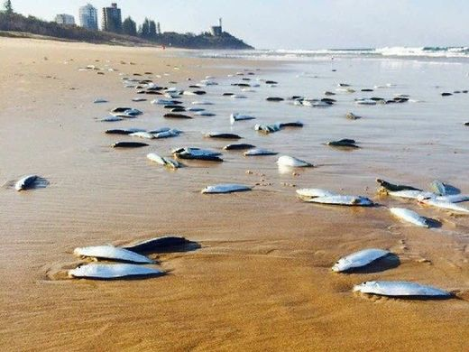 Mystery of thousands of fish that washed up on Queensland beach then disappeared