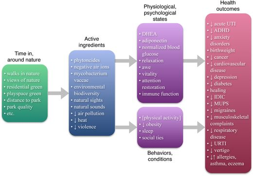 Scientific studies show the myriad ways nature enhances physical and mental health