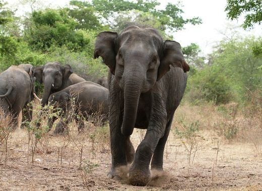 Three elephants kill two women in West Bengal, India