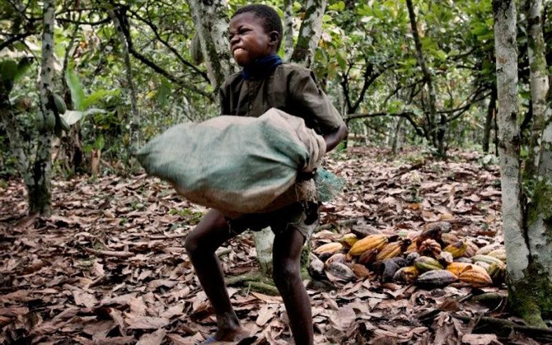 Resultado de imagem para O lado obscuro do chocolate: a destruição das florestas da África