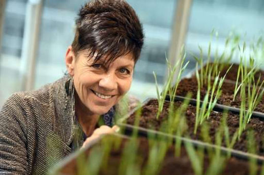 'Resurrection plants' might lead to drought-tolerant crops
