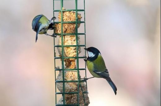Study finds wild birds willing to forego reliable food sources to stay with their partners