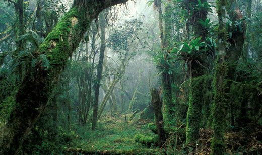 8,690 tree species in the Amazon may be on verge of extinction