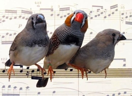 Birds and humans: Same physical mechanism for singing, talking