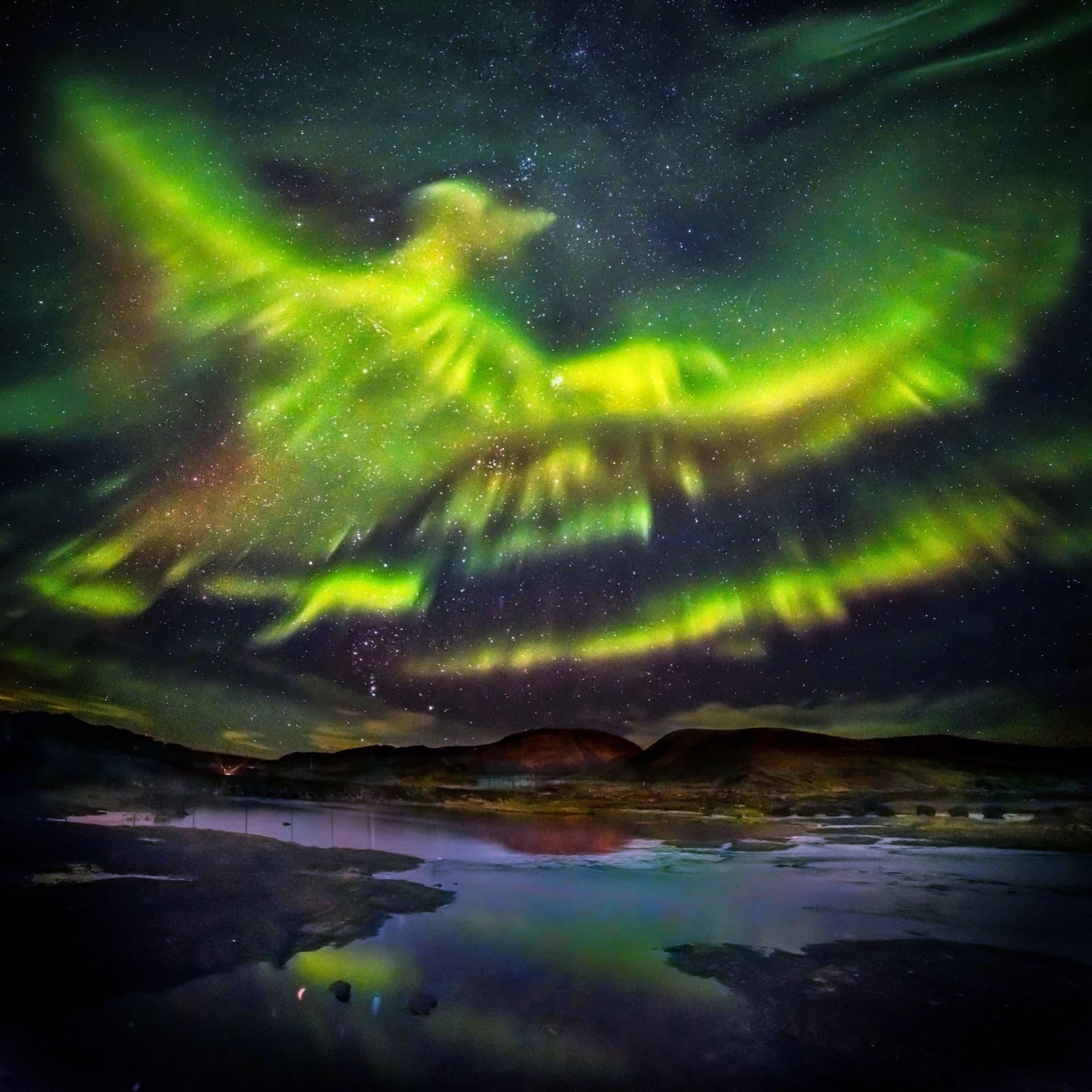 Текущие события - солнце, НЛО, ураганы, северное сияние.... Caters_News_Agency_Aurora_bird