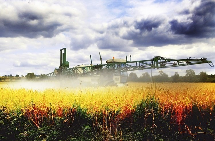RoundUp being sprayed just before harvest