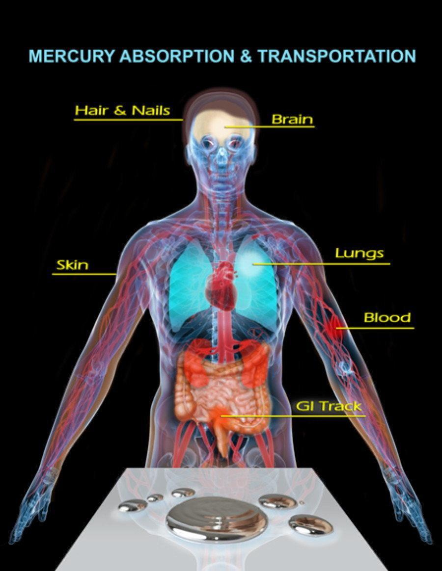 how heavy is human brain