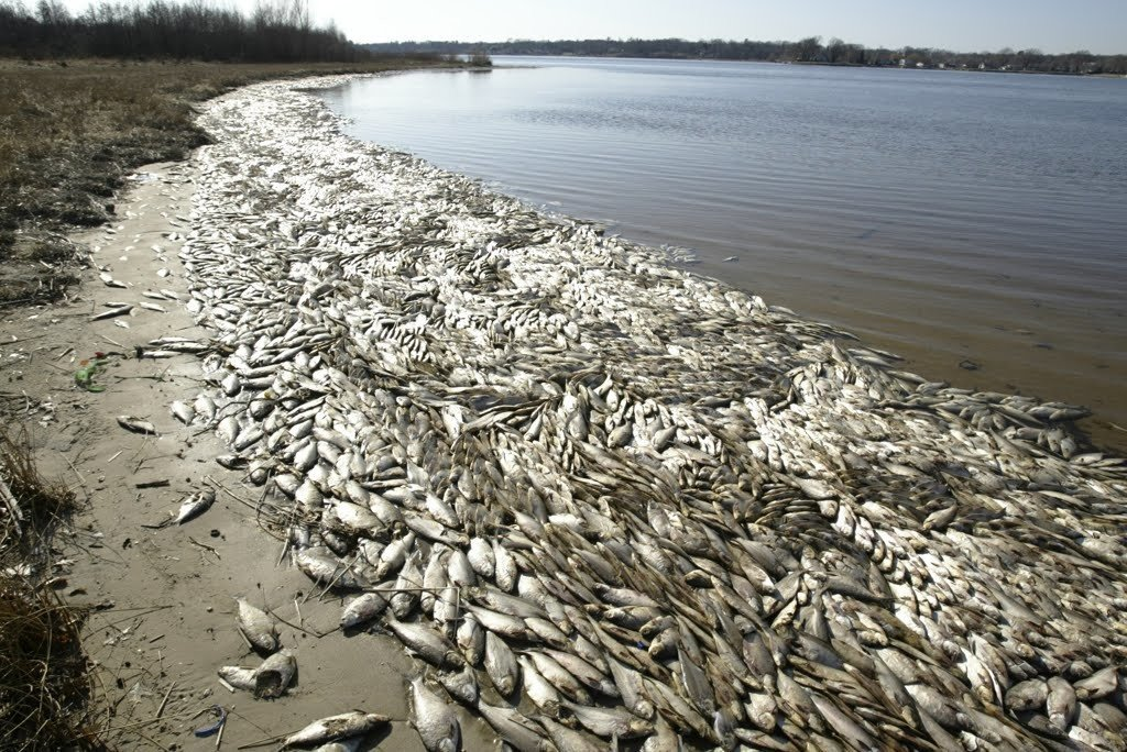 Fish dying by the millions all over the planet in last for All the fish in the sea