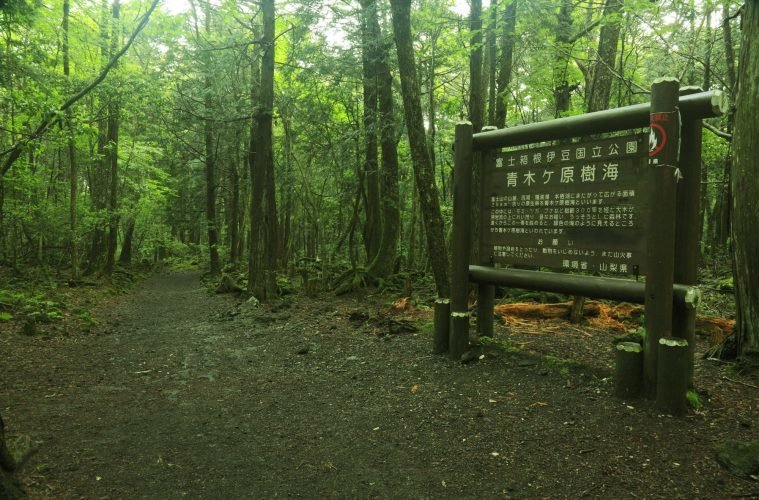 Image result for Aokigahara