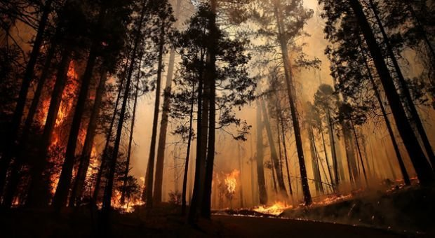 Image result for wildfire tree destruction