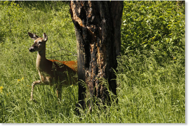 Over 2 000 deer reported dead in south dakota disease for South dakota game fish and parks fishing reports