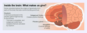 giving_brain_595x198.jpg