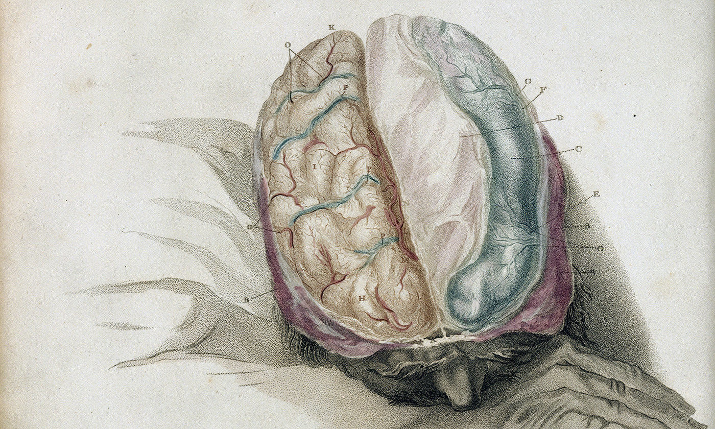Corpus Callosum When You Split The Brain Do You Split The Person