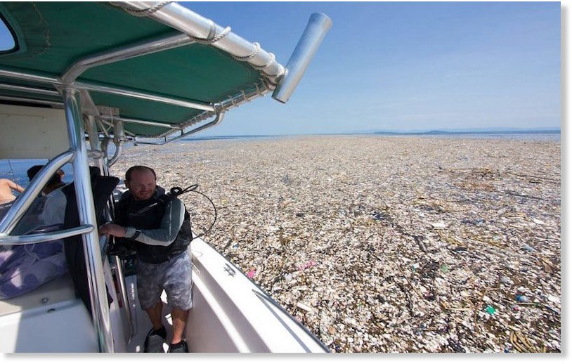 Choked to death by human waste shocking pollution in the sea of plastic sciox Image collections