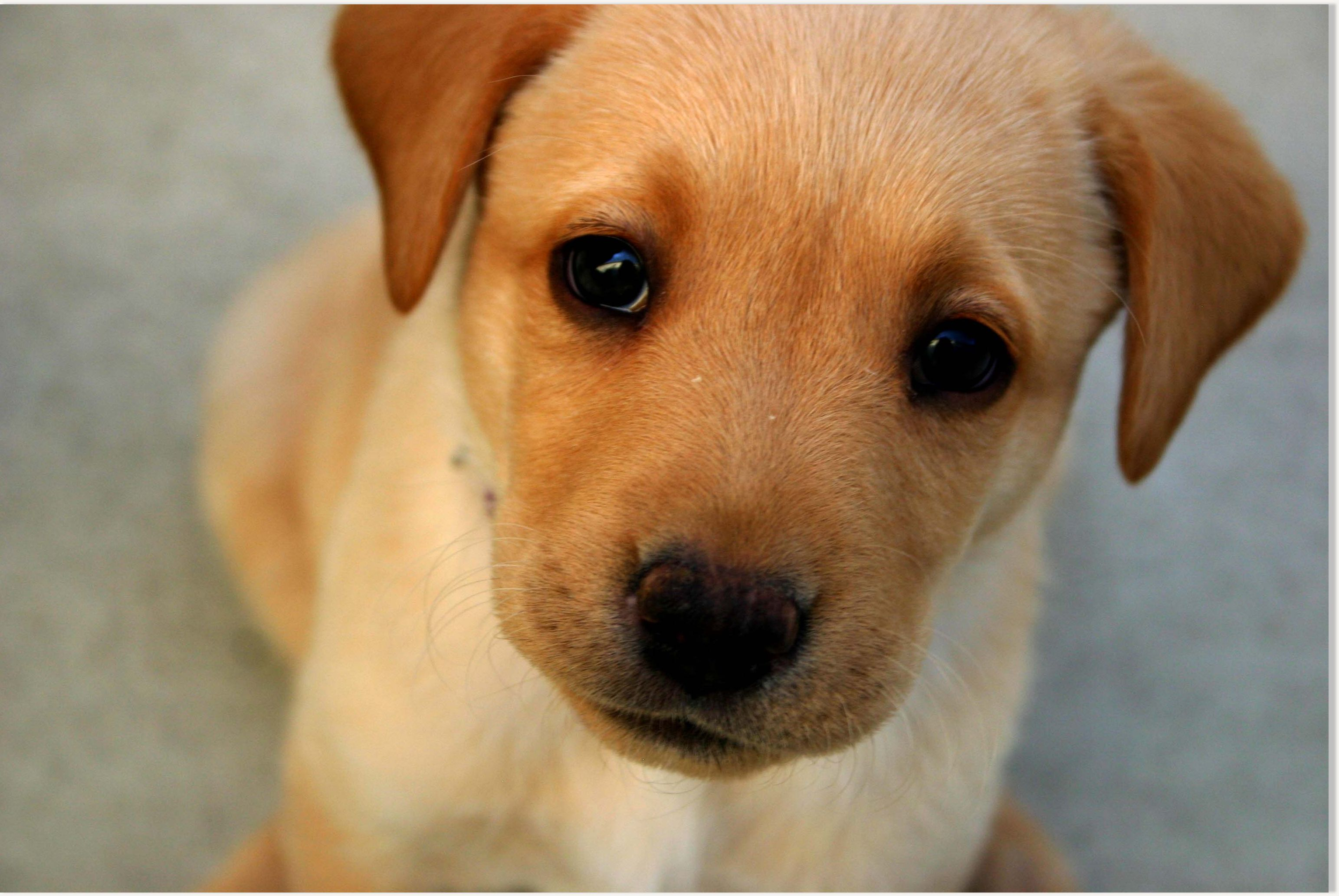 Dogs probably feel sorry for us science of the spirit for Pictures of cute dogs