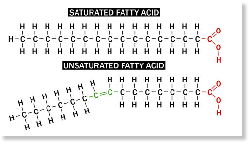 Saturated Fat Examples 40