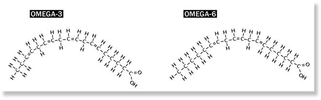 Everything About Fat | we must knowOmega 3 Fatty Acid Structure