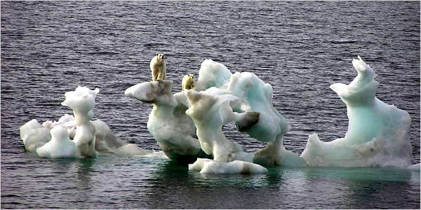 Melting Ice Caps Polar Bears on Melting Ice Cap a Hoax