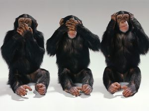 hear,see,speak no evil