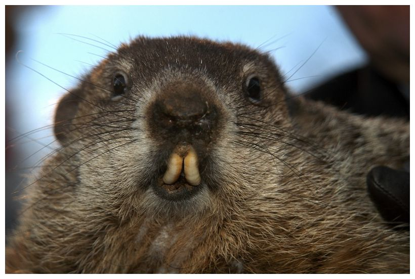how to clean a groundhog