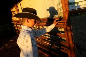 Cole Hatfield tends to his show steers