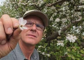 Keith Wright displays a frost-damaged apple blossom