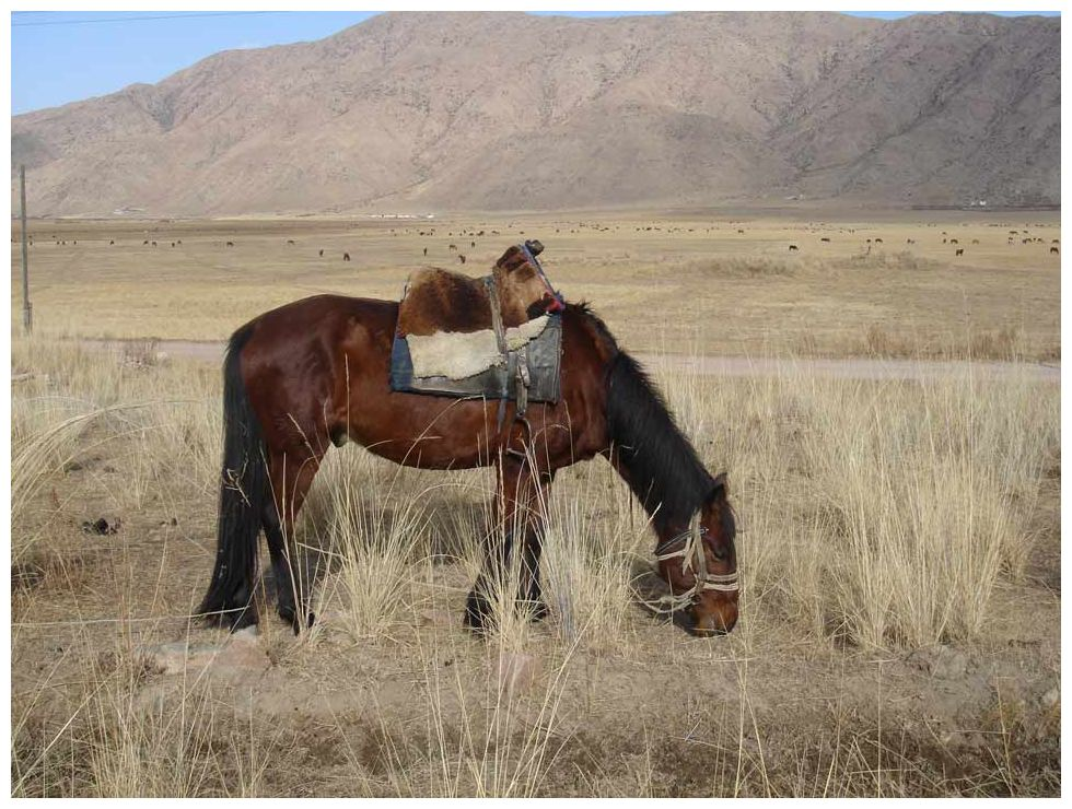 Who First Domesticated Horses? The History News of the Week