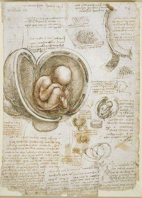 Leonardo's Drawing