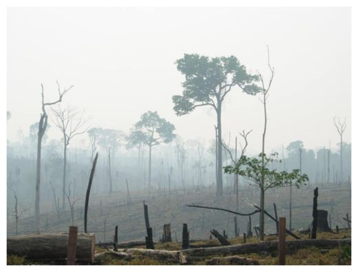 Burnt Amazon Forest