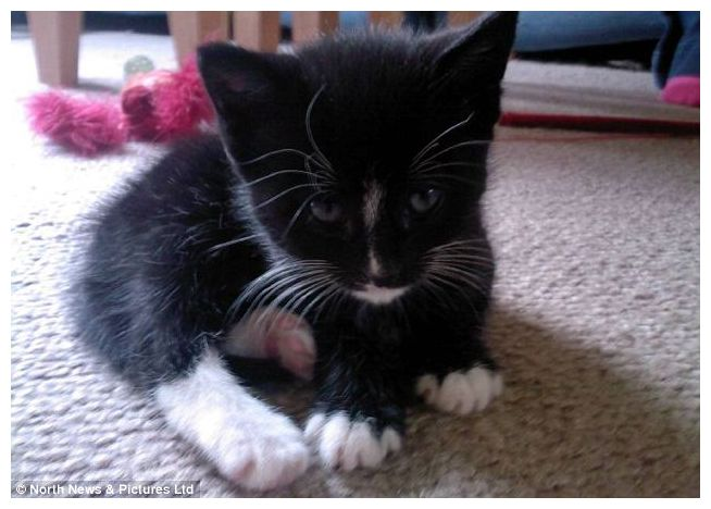 Black And White Cat Saves Diabetic Owner Society S