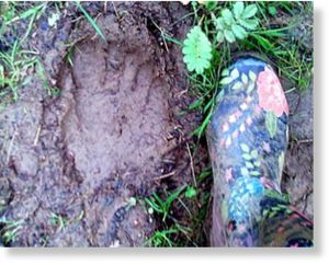 Bigfoot print in Cotswolds
