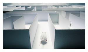 Mice in Maze
