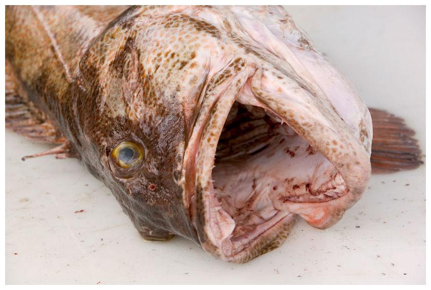 Fukushima Fisch