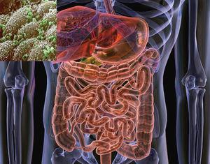 Gut_Flora_Bacteria.jpg