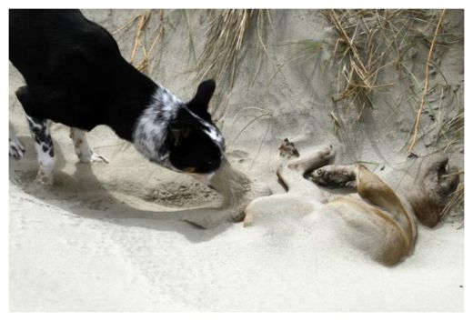 Dog Burying Another Dog