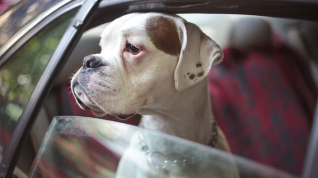 Man Run Over Killed When Dog Jumps Into Car Pushes