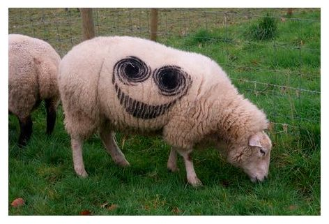 Smiley Sheep