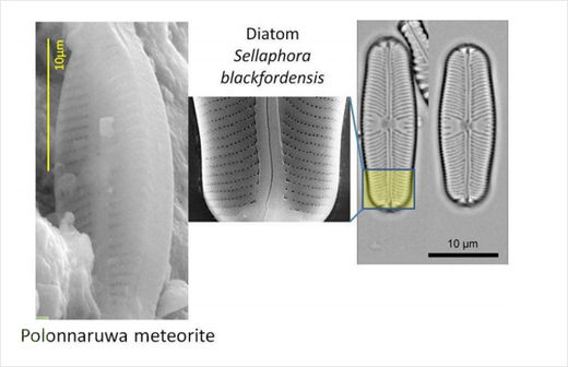 Comparison of a Polonnaruwa meteorite structure with a well-known terrestrial diatom
