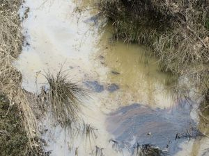 Tar sands oil seen in local waterways weeks after ExxonMobil's Pegasus pipeline ruptured.