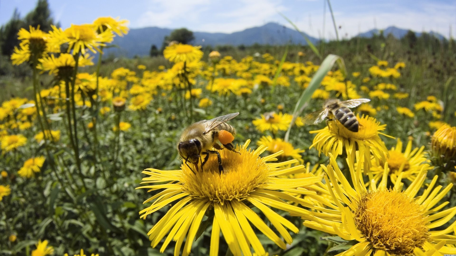 Again And 37 Million Bees Found Dead Earth Changes Sott