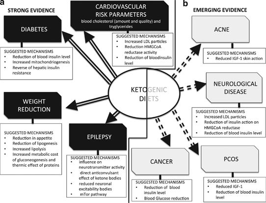 Beyond weight loss: a review of the therapeutic uses of very-low-carbohydrate (ketogenic) diets ...