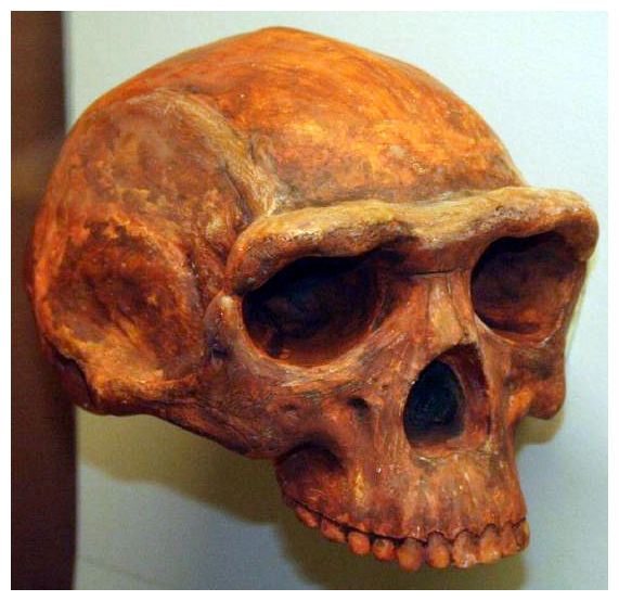 Early humans lived in China 1.7 million years ago ...
