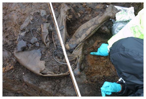 Oldest 'bog body' found with skin intact in Ireland ...