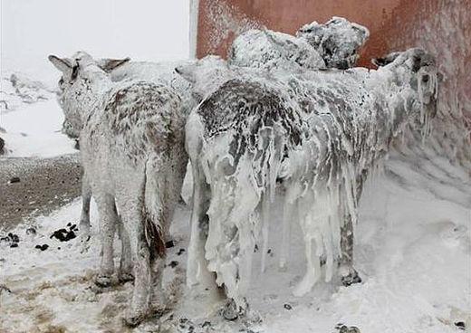 Donkeys freeze in Turkey