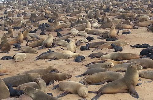 Seals_.jpg