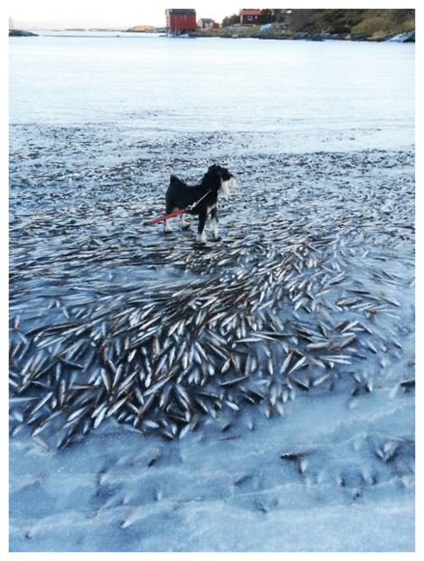 Fish encased in ice mass death in norway as the water for Water dogs fish