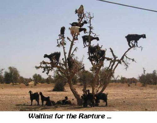 Waiting for the Rapture...